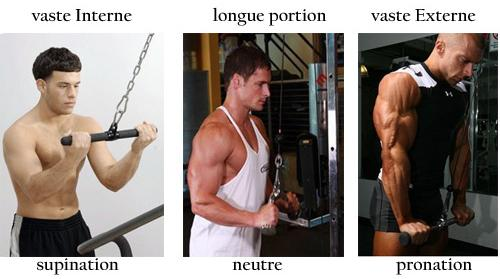exercice isolation triceps