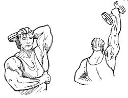 musculation halteres