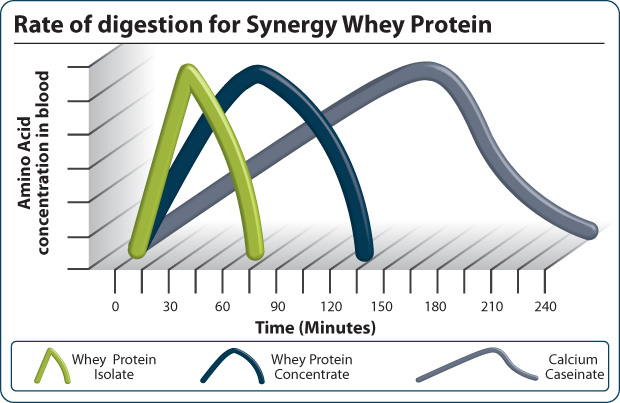 vitesse proteine