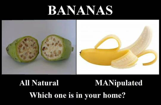 banane ogm